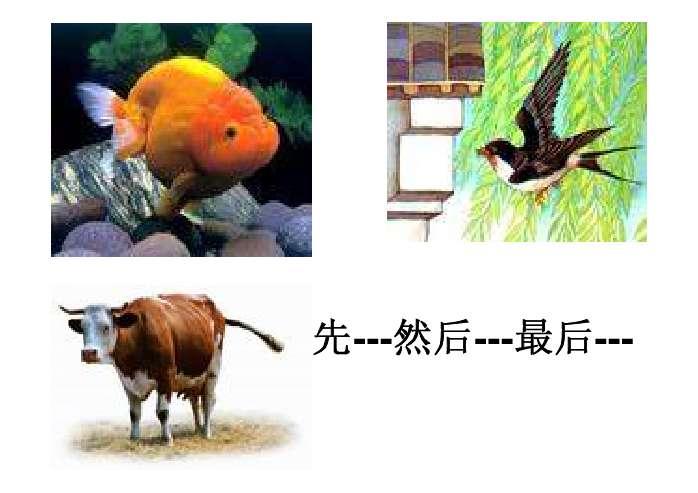 一些动物尾巴的作用