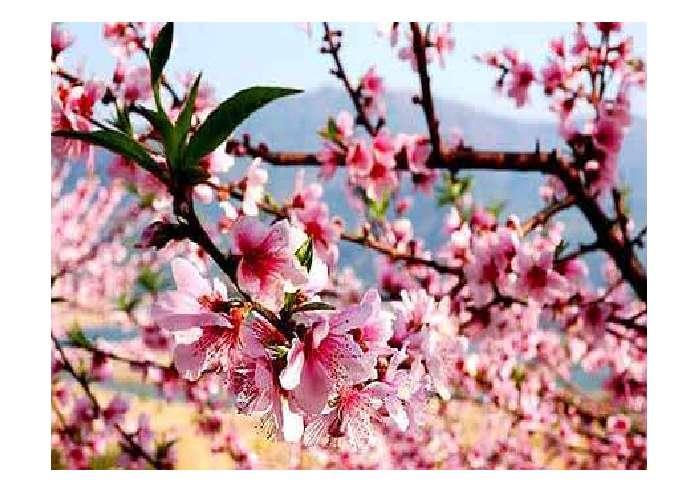 了解春天景物的特点,感受春天景色的美好