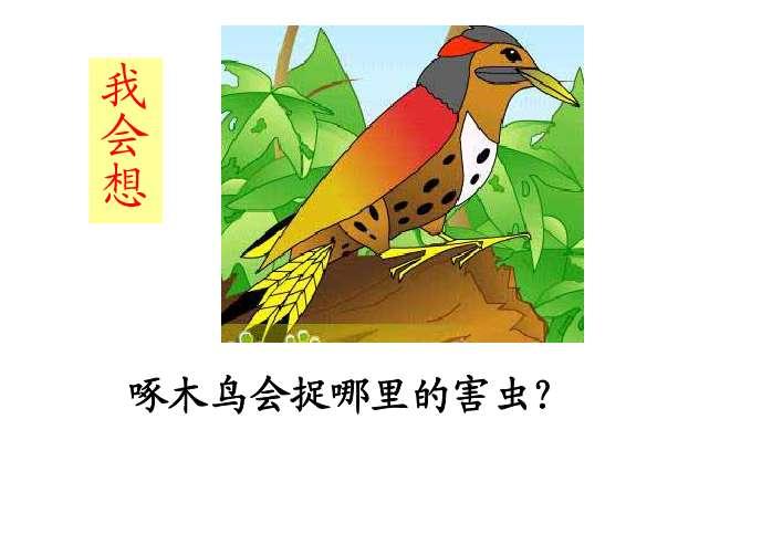 4,懂得许多小动物都能捉害虫,不同的动物捉不同害虫的