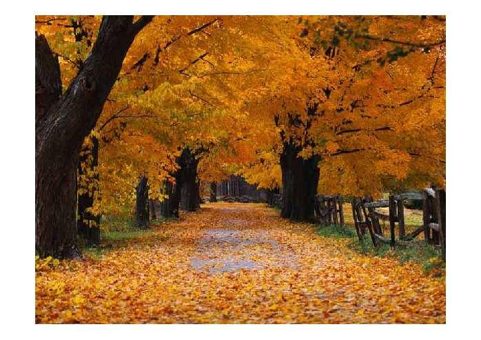 秋天的图画ppt