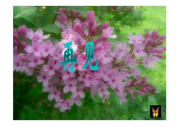 一株紫丁香ppt - 二年级