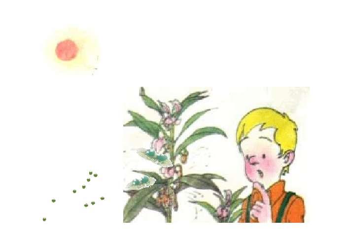 """苍耳传播种子的图片_骑""""白马""""的苍耳PPT - 二年级- 21世纪教育"""