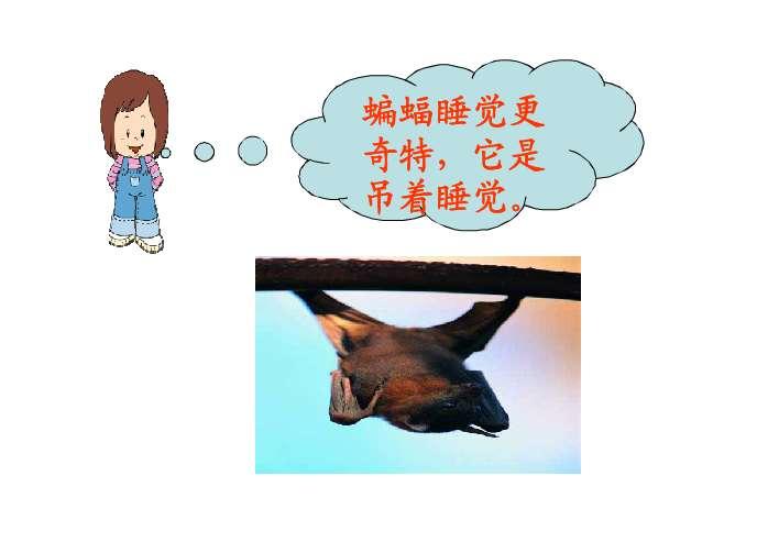 知道并感受到动物睡觉的姿势千奇百怪