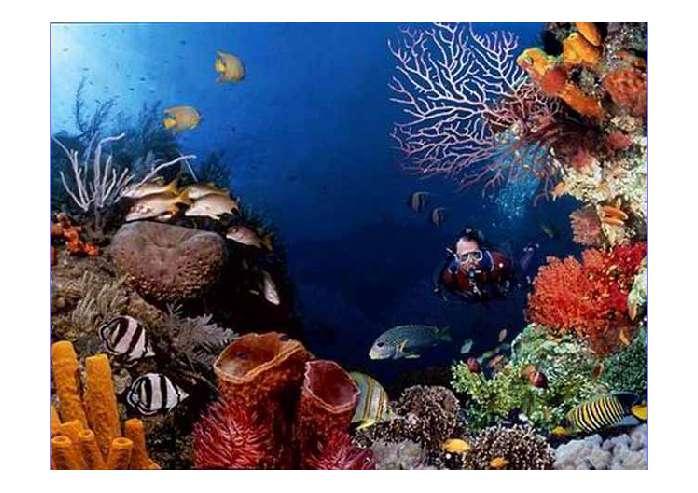 海底世界ppt