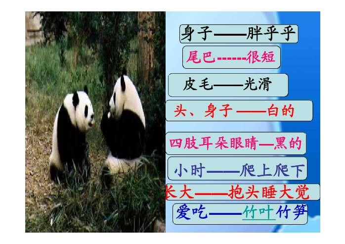 可爱的大熊猫教学实录