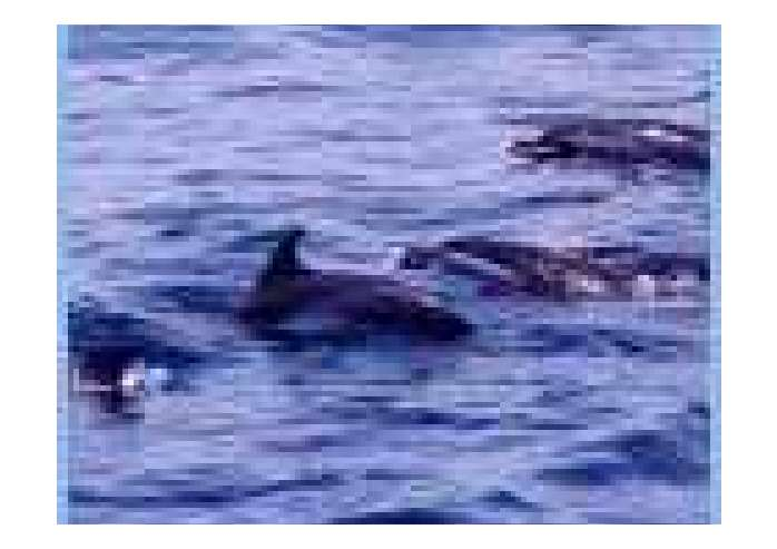 太空泥作品步骤图片鲸