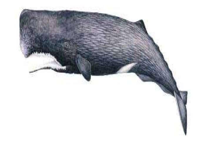 鲸课文结构图