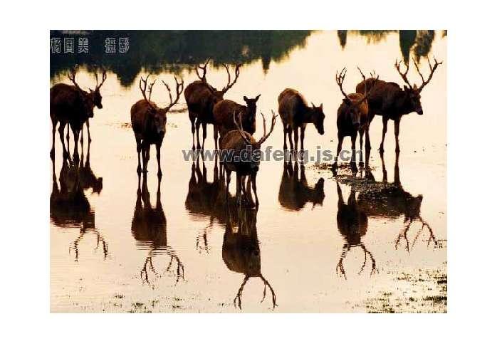懂得去保护野生动物