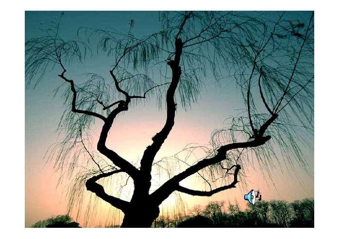 这株柳树大约有两合抱粗