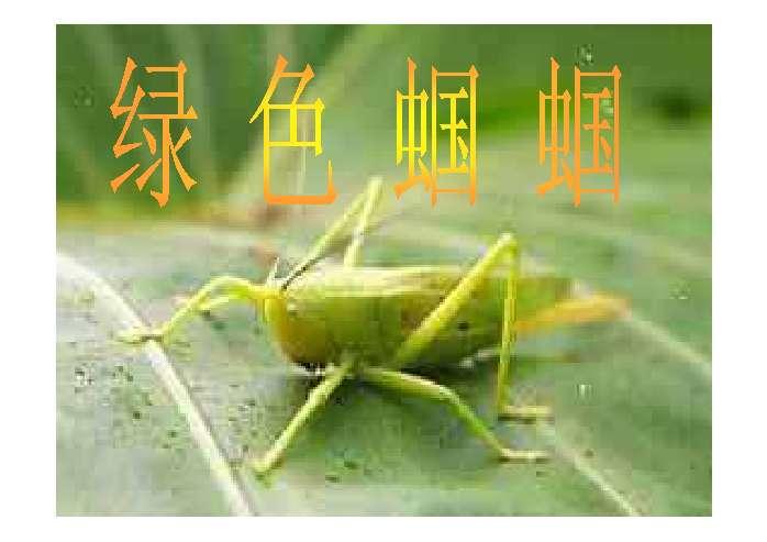 69 课件制作技巧   21世纪教育网小编给大家整理了初一语文绿色蝈蝈