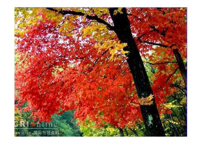 秋天枫叶折纸步骤