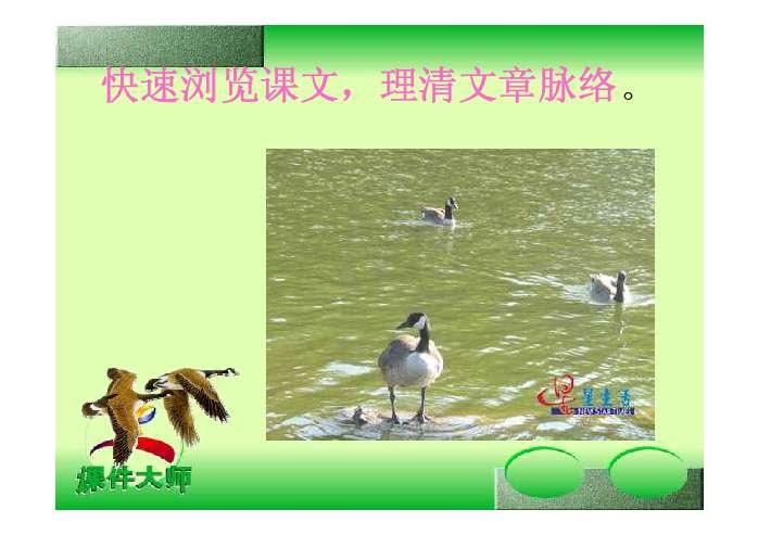 激发保护野生动物的思想和情感