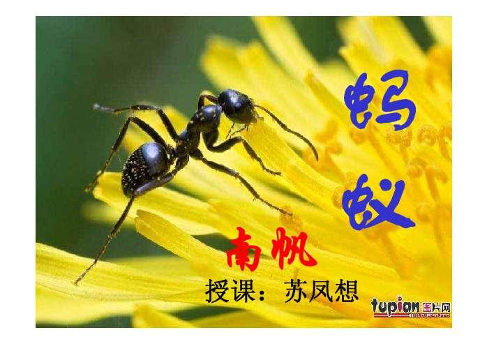 了解蚂蚁基本的身体构造和