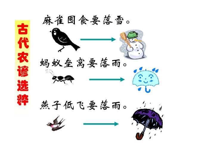 大自然的语言ppt